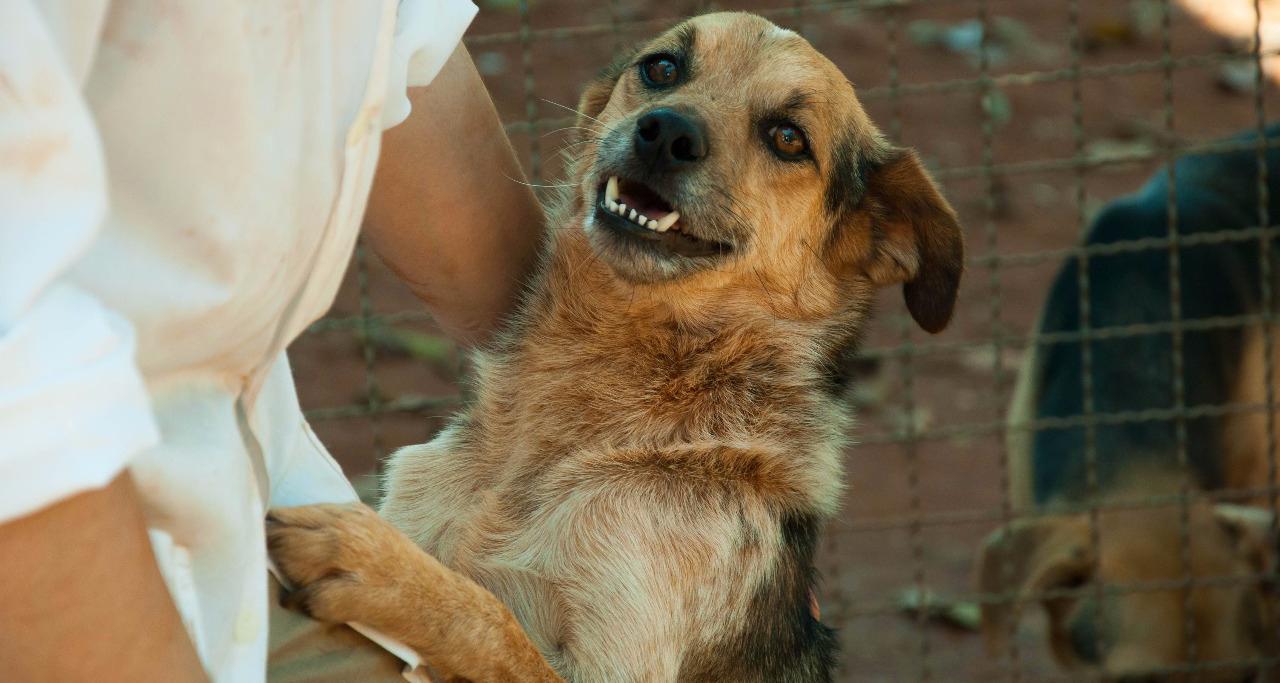 Iracemápolis faz campanha de adoção de animais do Canil