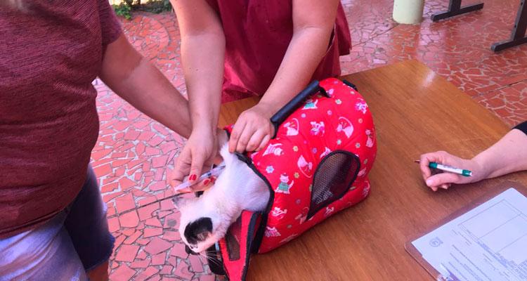 Vacinação para cães e gatos vai até sábado