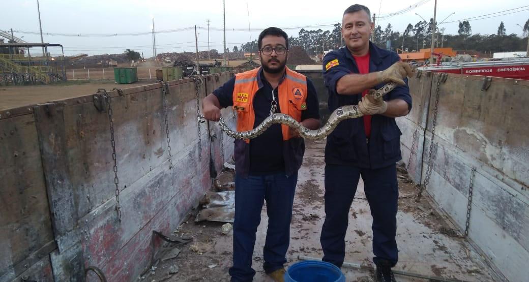 Cobra é capturada em caminhão