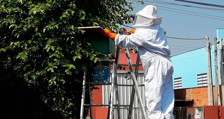 Defesa Civil ajuda moradores na remoção de abelhas