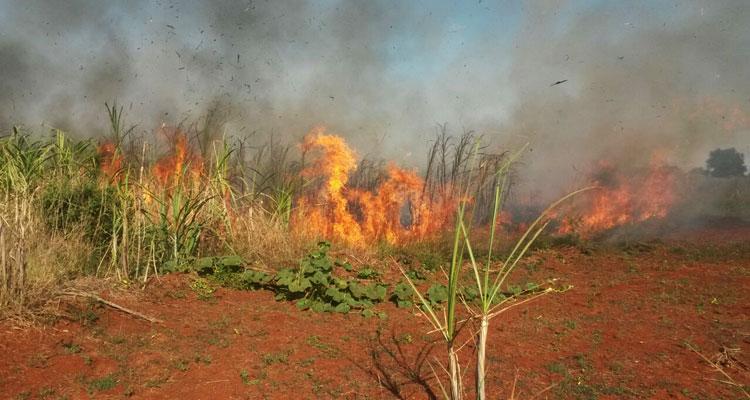 Estiagem: Defesa civil alerta sobre o perigo de incêndios